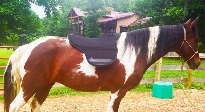 Freeform pad on a horse.